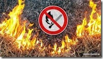 пожежы в екосист
